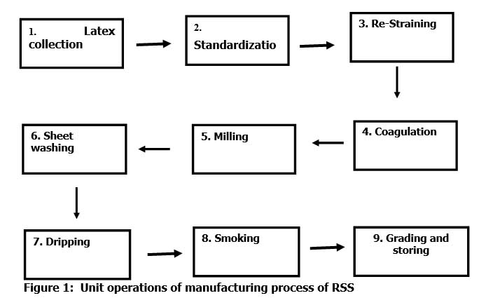 Preparing Ribbed Smoke sheets - RSS rubber